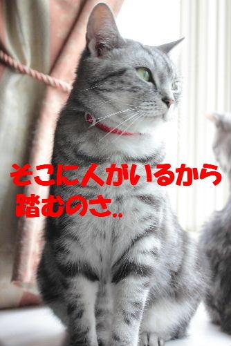 2011年7月踏み3.JPG