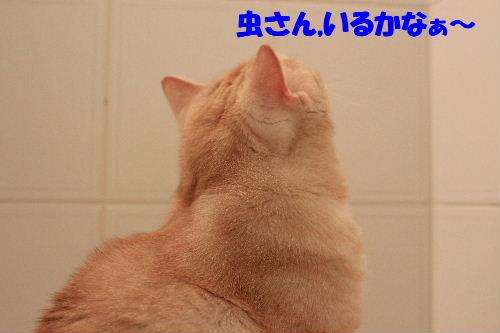 2011年8月リベ3.JPG