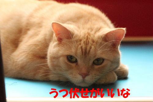 2011年9月あお2-4.JPG