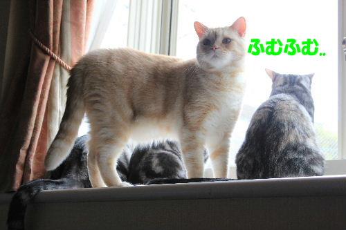 2011年9月アキ3.JPG