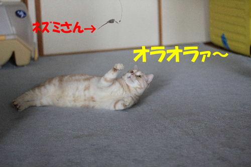 2011年9月最終4-2.JPG