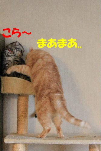 2012年1月大将1-3.JPG