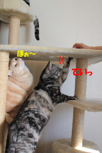 2012年1月子供2-2.JPG