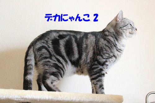 2012年1月子供3.JPG
