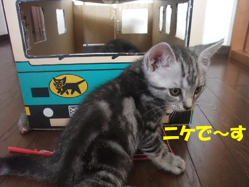 2012年1月黒猫2-3.JPG