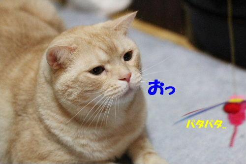 2012年2月じゃ2-2.JPG