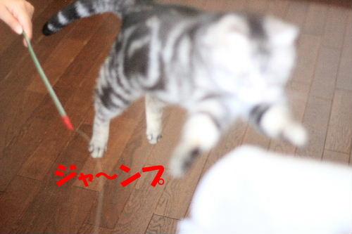 2012年2月シ5.JPG