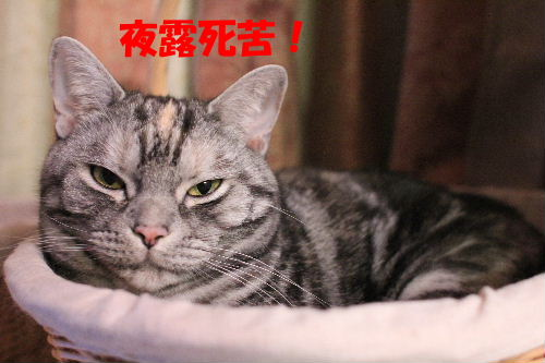 2012年2月夢4.JPG