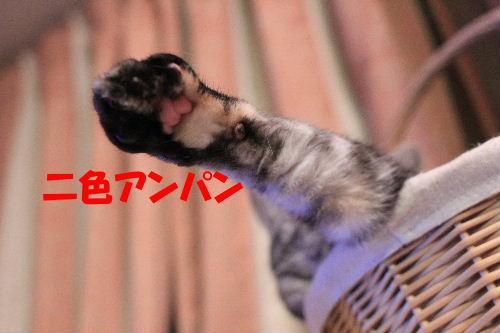 2012年2月夢5.JPG