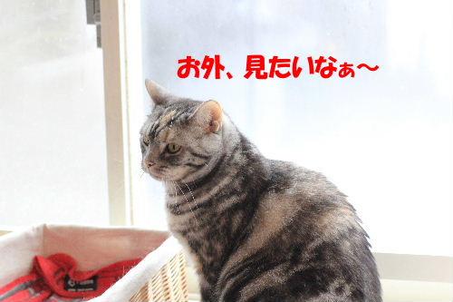 2012年2月雨1.JPG