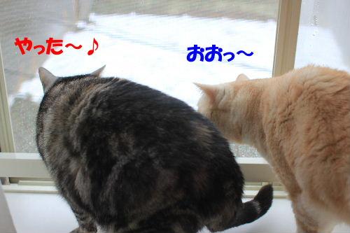 2012年2月雨1-2.JPG