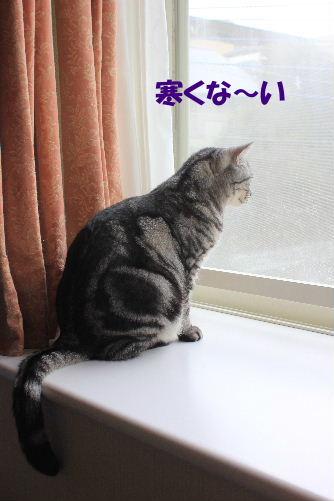 2012年2月雨4.JPG