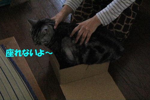 2012年3月ちい2-3.JPG