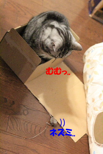 2012年3月ちい3.JPG