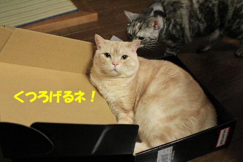 2012年3月レイン5.JPG