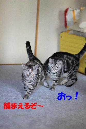 2012年3月跳ぶ2.JPG
