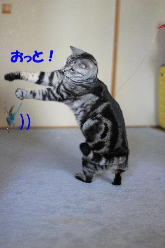 2012年3月跳ぶ2-2.JPG