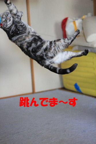 2012年3月跳ぶ2-4.JPG