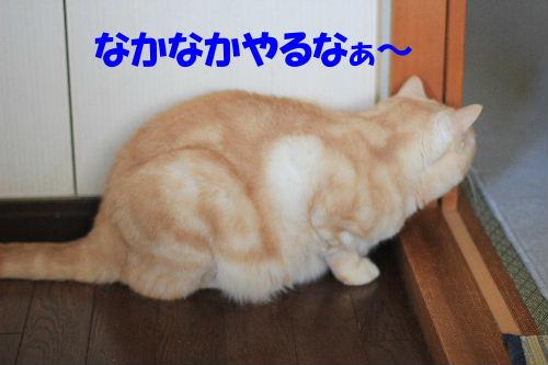 2012年3月跳ぶ3.JPG