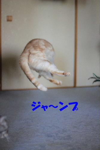 2012年3月跳ぶ3-5.JPG