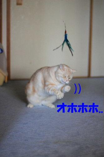 2012年3月跳ぶ3-6.JPG
