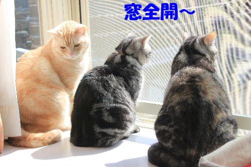 2012年3月陽2-3.JPG
