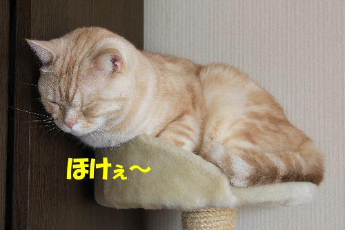 2012年3月陽4.JPG