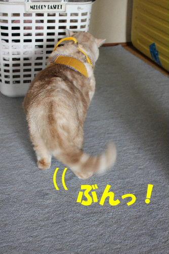 2012年4月ハーネス2-6.JPG