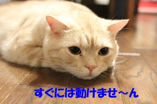 IMG_2209.JPG
