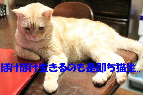 IMG_2271.JPG