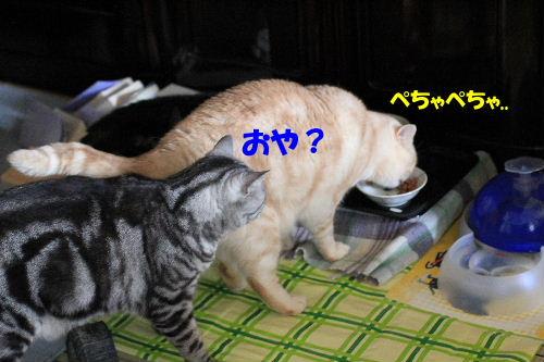 IMG_3950.JPG