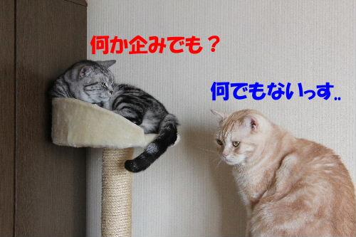 IMG_5031.JPG