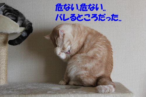 IMG_5033.JPG