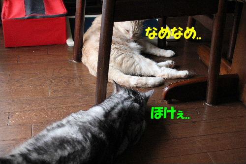 IMG_6322.JPG