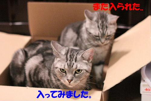 IMG_8891.JPG
