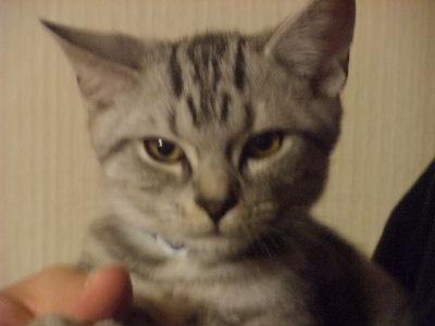 2009年11月抱っこ4.JPG