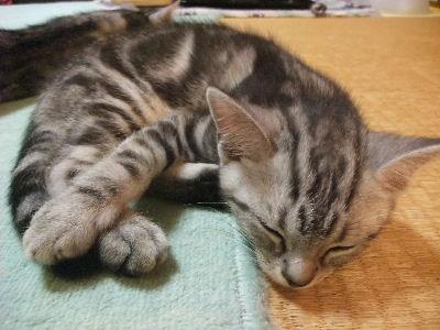 2009年11月眠い6.JPG