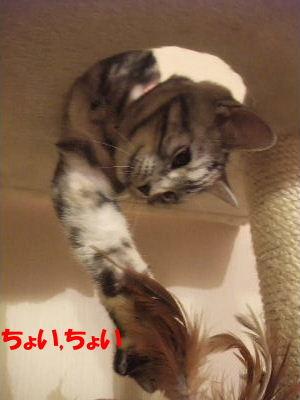 2009年12月バブハ3.JPG