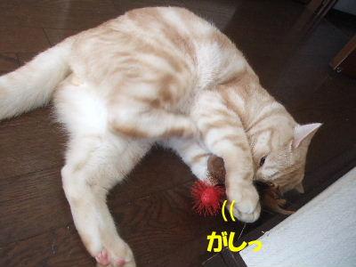 2009年12月バブ圭3.JPG