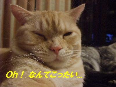 2009年12月乗っかり4.JPG