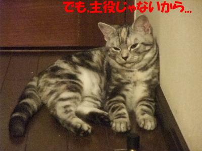 2009年12月鑑定5.JPG