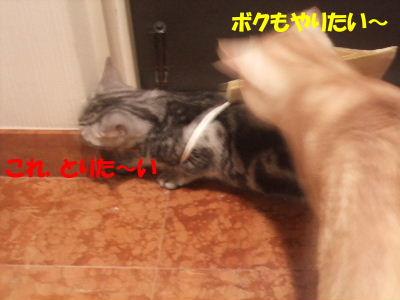 2009年6月ふくろ4.JPG
