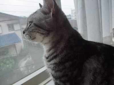 2009年7月レン0.JPG
