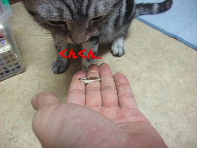 2009年7月リベンジ2.JPG