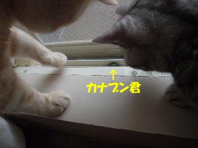 2009年8月珍客1.JPG