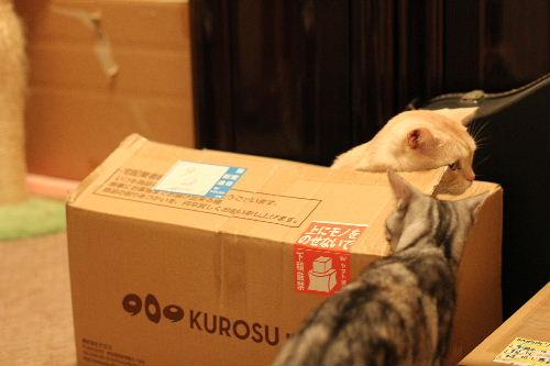 2010年10月ホッパー9-2.JPG