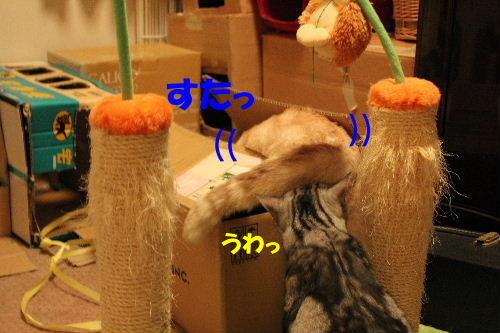 2010年10月遊ニャン2-3.JPG