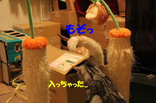 2010年10月遊ニャン2-4.JPG