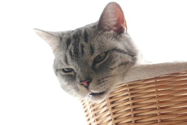 2010年11月ホーン4.JPG