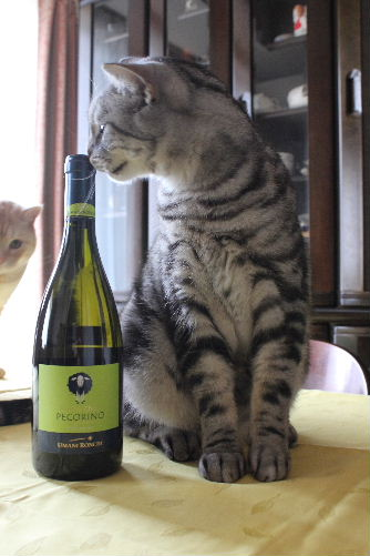 2010年11月ワイン9.JPG